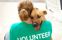 Volunteer with Animal Shelters in NH